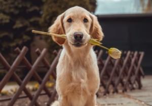 復縁したい犬